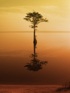Every Day Sacred - tree in water