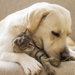 Every Day Sacred - kitten and dog cuddling